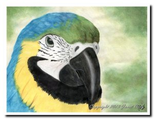 A watercolor portrait of the close up face of a blue and gold macaw by Jae (then Bray) Cosma